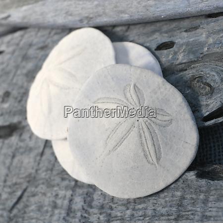 natutical shell