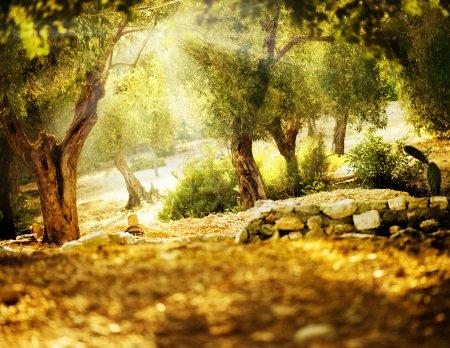 Фон, Вид, дизайн, искусство, Солнце, на открытом воздухе - B10677025