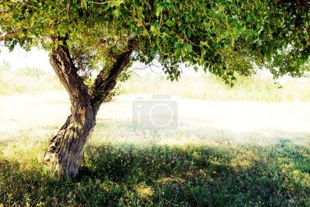 Image-id B98361680