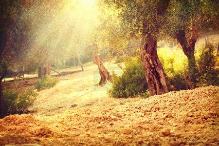 Фон, искусство, Солнце, на открытом воздухе, Природа, Сад - B113666754